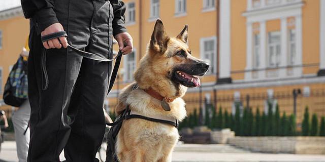 Cortesia Sécurité privée - Agent de sécurité Maître Chien 82462