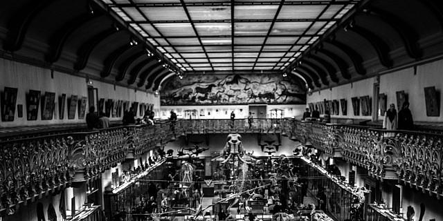 François Dufaux - Fic - Musee paléontologique Paris 73630