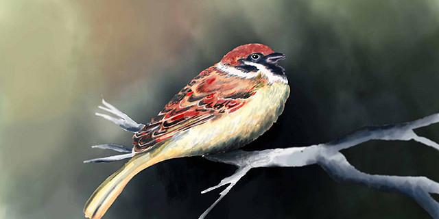 Hassiba Kessaci - illustration numérique oiseau 77515