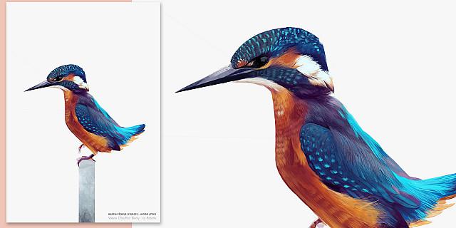 La Robotte - Illustration naturaliste 78842
