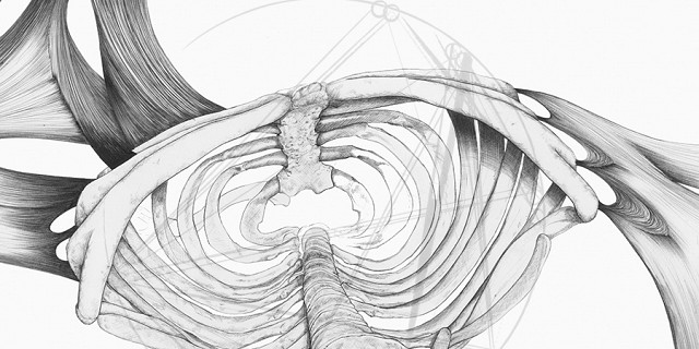 Le Pika - Cage thoracique - hyper realisme 85873
