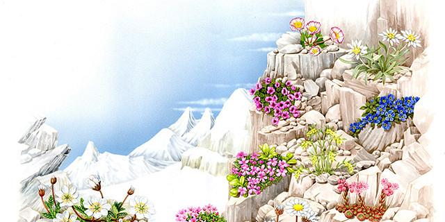 Studio Delétraz - Double page pour ''Les fleurs de montagnes'' 82712